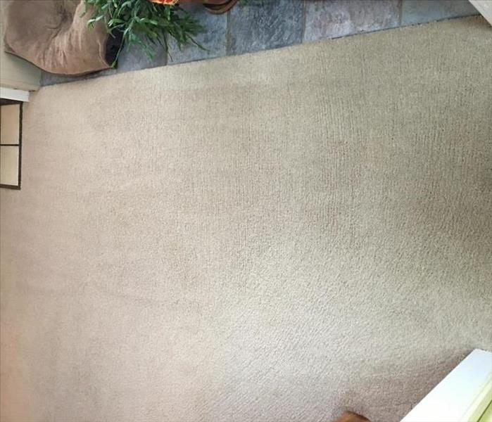 "Carpet Cleaning at its ""Best"" After"