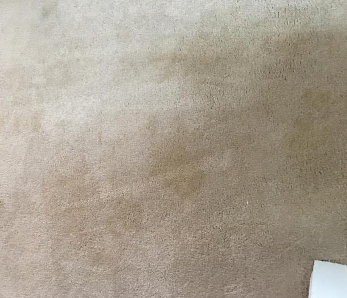 "Carpet Cleaning at its ""Best"" Before"